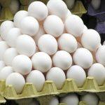 Tavuk yumurtası üret...
